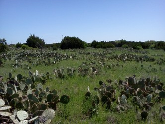 Cactus, cactus everywhere! (Courtesy of Paula Richards)