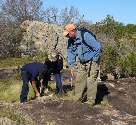 Lichen vs Moss vs Rock (Courtesy of Paula Richards)