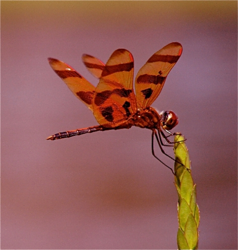 Halloween Pennant (Courtesy of Jo Ellen Cashion)