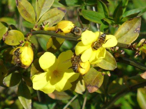 Honey bees having a feast. (Courtesy of Paula Richards)