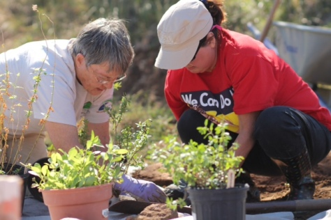 planting the right stuff Emily Hilley-Sierzchula