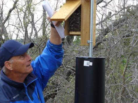 Checking on blue bird boxes in preparation for this year's nests. (Courtesy of Paula Richards)
